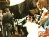 BeltinciMura_BG_199192_11.jpg